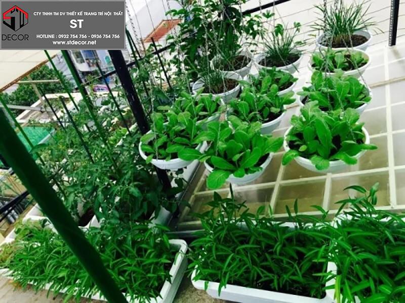 Mẫu thiết kế vườn rau trên sân thượng